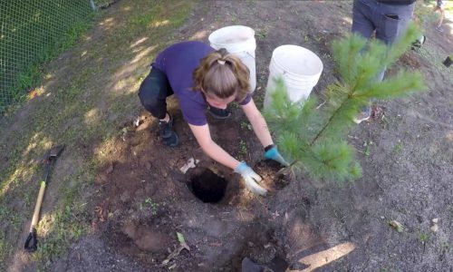 St. Anne Student Plating a Tree
